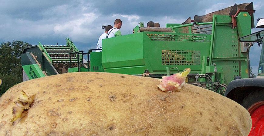 Die dümmsten Bauern haben auch in Zukunft die grössten Kartoffeln